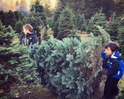 cutting down a tree at christmas creek near seattle