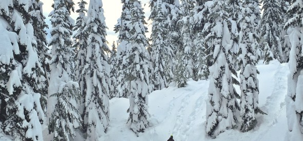 family snowshoeing in the pacific northwest