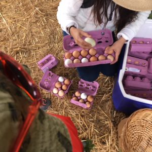 Suzy's Farm is a short drive from Imperial Beach and fun to see with kids