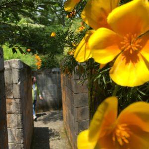 Flower Maze in Hakone japan