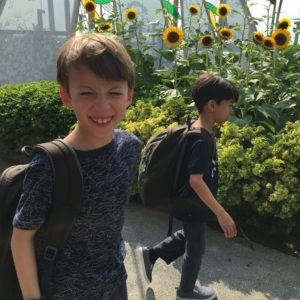 Rooftop garden at Changi Airport full of sunflowers