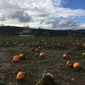 Jubilee Farms pumpkin patch