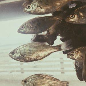 Mast Aquarium at Redondo Beach