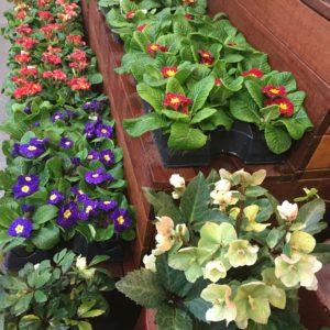 Spring flowers at Metropolitan Market