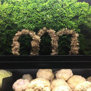 Green onions at Metropolitan Market