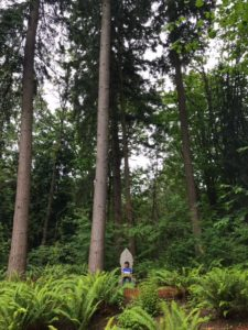 Bellevue Botanical Gardens is free to visit