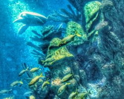 New England Aquarium CityPass
